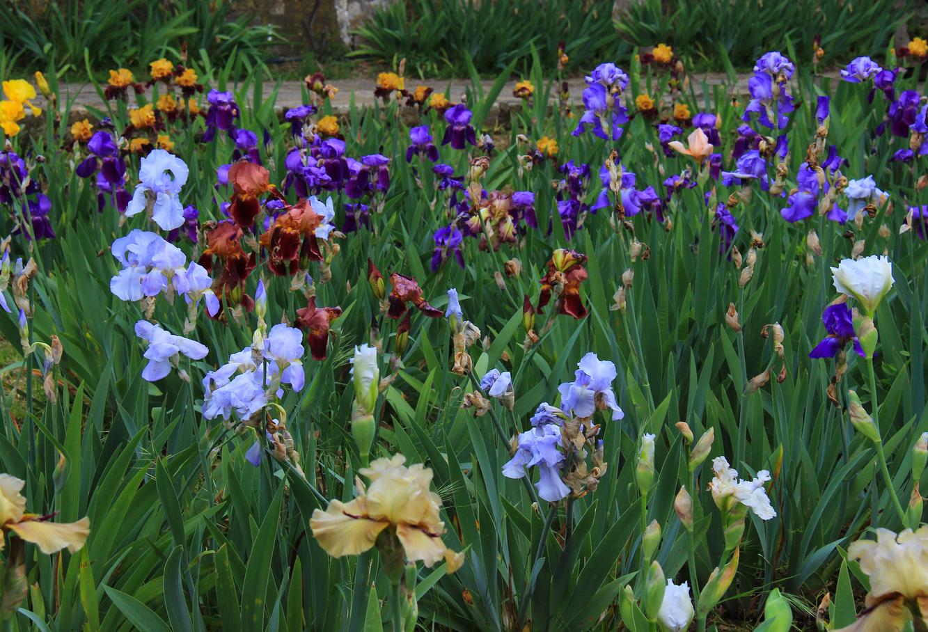 Giardino degli Iris Firenze